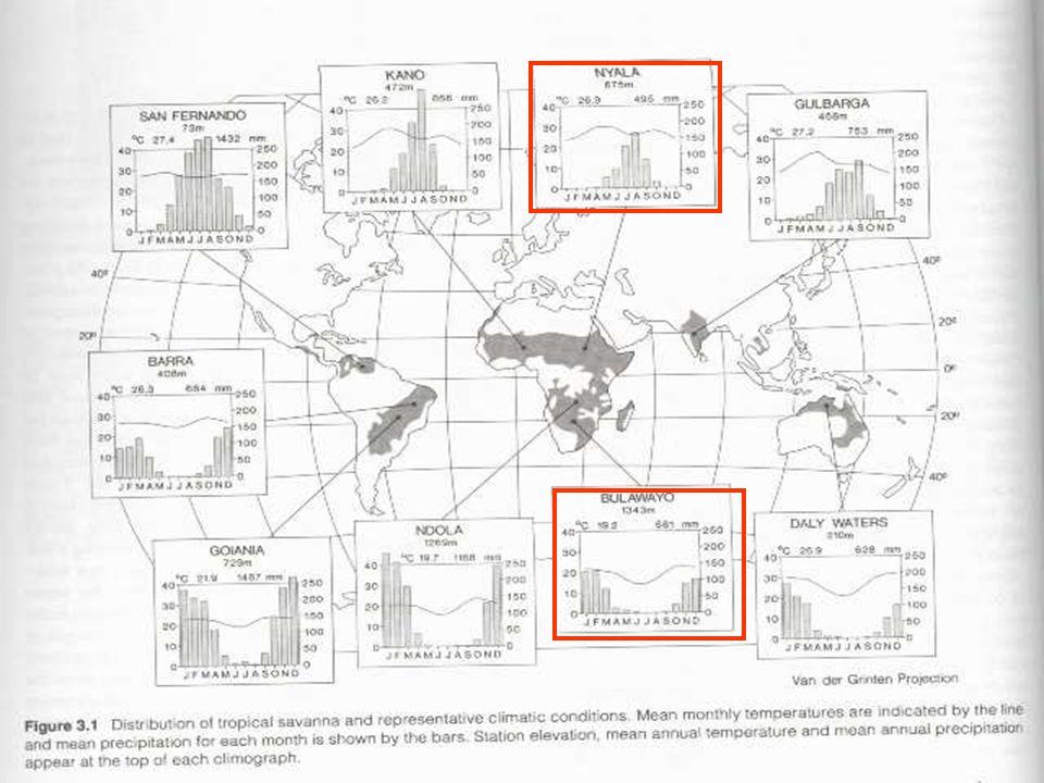 """http://digilander.libero.it/giorgioparodi/savana.jpg Role živočichů a jejich adaptace - až 50% primární produkce vstupuje do pastevně-kořistnického řetězce (velká diverzita vyšších obratlovců - """"safari ), sezónní stěhování stád."""