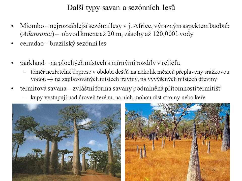 Další typy savan a sezónních lesů Miombo – nejrozsáhlejší sezónní lesy v j. Africe, výrazným aspektem baobab (Adansonia) – obvod kmene až 20 m, zásoby