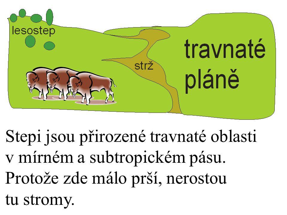 Stepi jsou přirozené travnaté oblasti v mírném a subtropickém pásu. Protože zde málo prší, nerostou tu stromy.