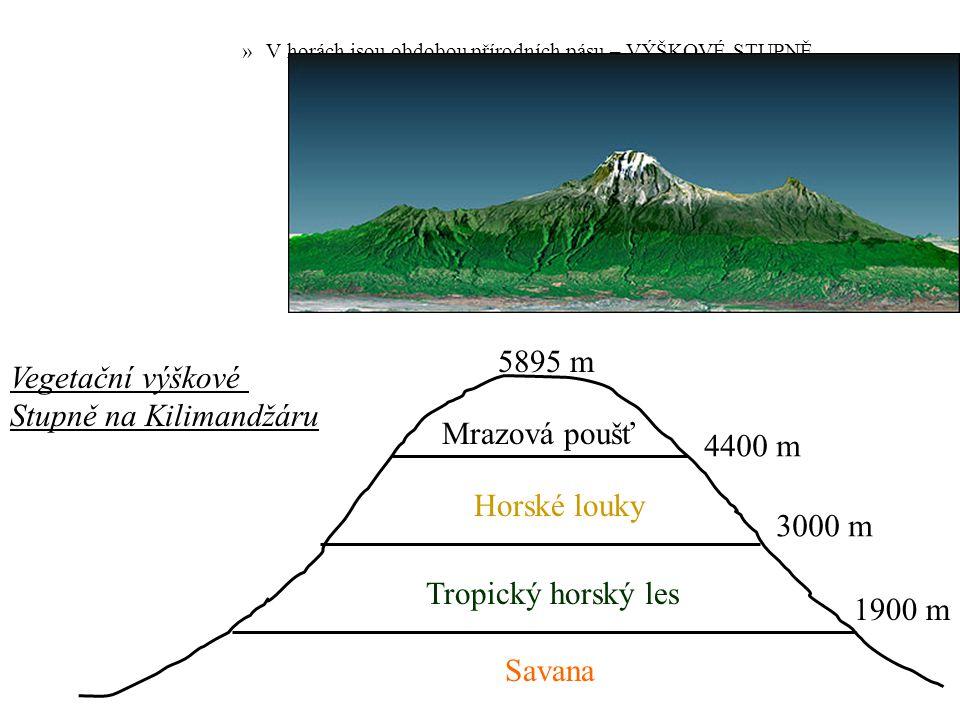 »V horách jsou obdobou přírodních pásu – VÝŠKOVÉ STUPNĚ. Vegetační výškové Stupně na Kilimandžáru 5895 m 4400 m Mrazová poušť Horské louky 3000 m Trop