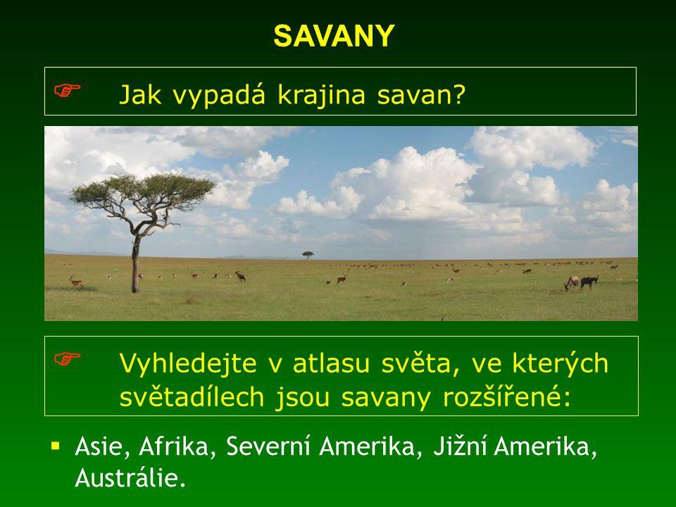 SAVANY  Jak vypadá krajina savan?  Vyhledejte v atlasu světa, ve kterých světadílech jsou savany rozšířené:  Asie, Afrika, Severní Amerika, Jižní A