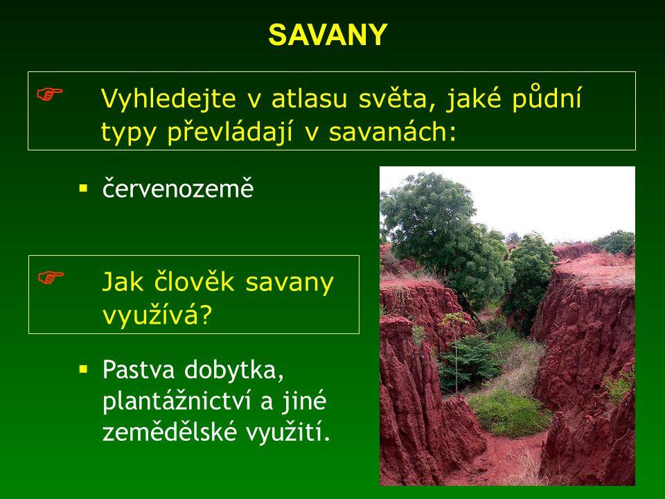  Vyhledejte v atlasu světa, jaké půdní typy převládají v savanách:  Jak člověk savany využívá?  červenozemě  Pastva dobytka, plantážnictví a jiné