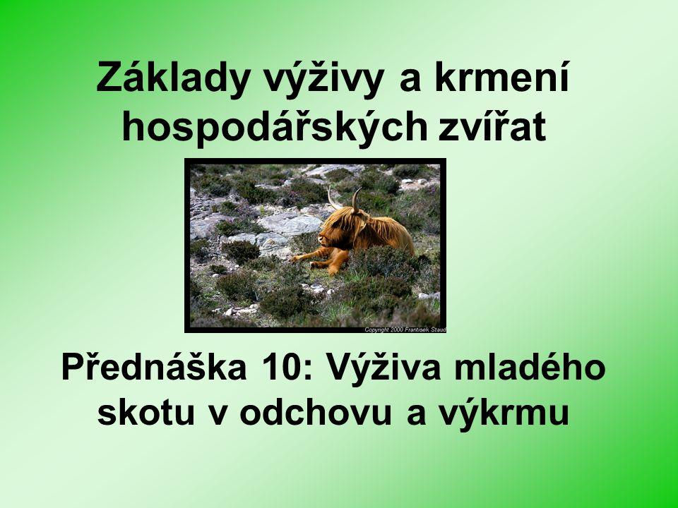 Příklady krmných dávek pro plemenné býky Krmivokg 1.