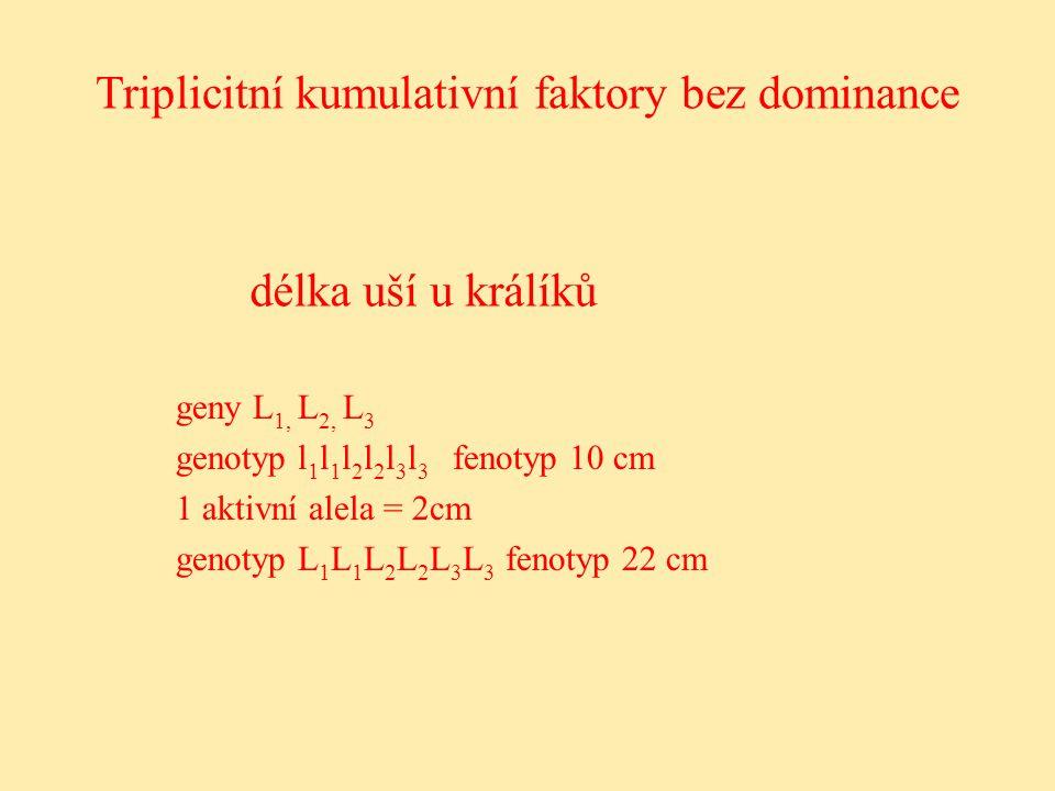 délka uší u králíků geny L 1, L 2, L 3 genotyp l 1 l 1 l 2 l 2 l 3 l 3 fenotyp 10 cm 1 aktivní alela = 2cm genotyp L 1 L 1 L 2 L 2 L 3 L 3 fenotyp 22 cm Triplicitní kumulativní faktory bez dominance