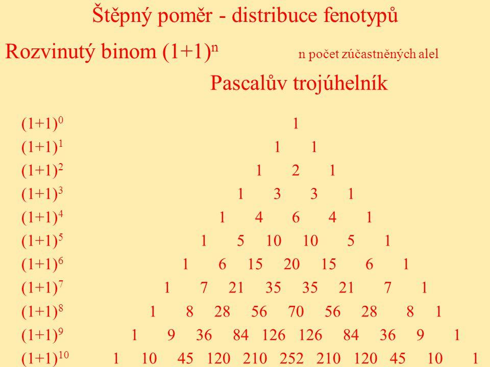 Štěpný poměr - distribuce fenotypů 1 1 2 1 1 3 3 1 1 4 6 4 1 1 5 10 10 5 1 1 6 15 20 15 6 1 1 7 21 35 35 21 7 1 1 8 28 56 70 56 28 8 1 1 9 36 84 126 126 84 36 9 1 1 10 45 120 210 252 210 120 45 10 1 (1+1) 0 (1+1) 1 (1+1) 2 (1+1) 3 (1+1) 4 (1+1) 5 (1+1) 6 (1+1) 7 (1+1) 8 (1+1) 9 (1+1) 10 Rozvinutý binom (1+1) n n počet zúčastněných alel Pascalův trojúhelník