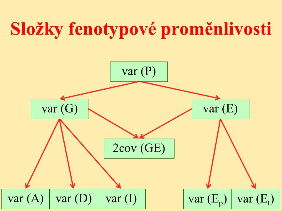 Složky fenotypové proměnlivosti var (P) var (G)var (E) 2cov (GE) var (A)var (D)var (I) var (E p )var (E t )