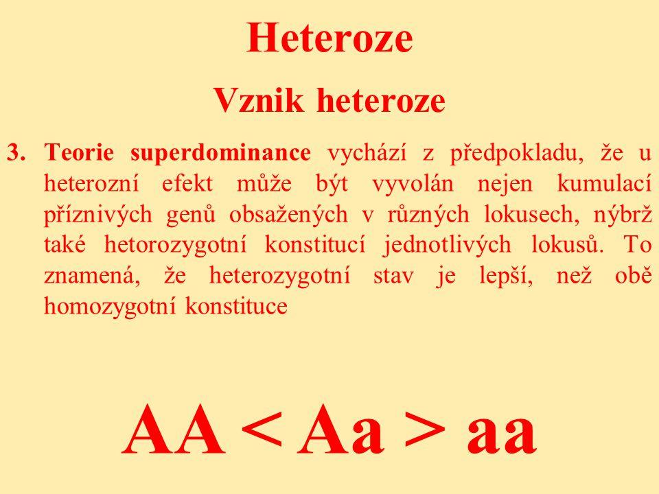 Heteroze 3.Teorie superdominance vychází z předpokladu, že u heterozní efekt může být vyvolán nejen kumulací příznivých genů obsažených v různých lokusech, nýbrž také hetorozygotní konstitucí jednotlivých lokusů.