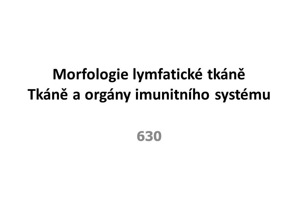 Morfologie lymfatické tkáně Tkáně a orgány imunitního systému 630