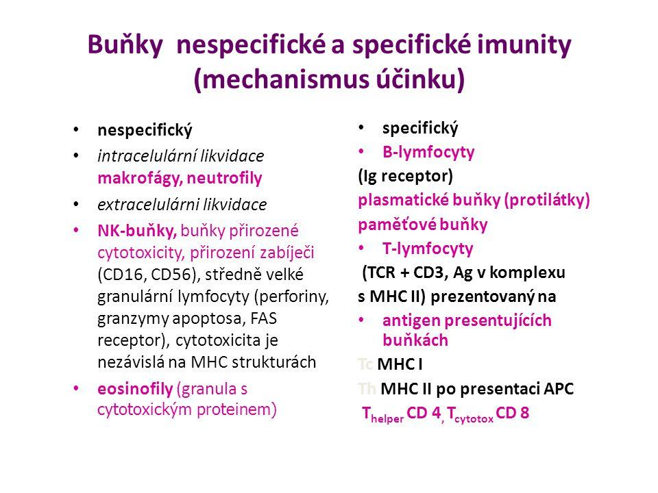 Buňky nespecifické a specifické imunity (mechanismus účinku) nespecifický intracelulární likvidace makrofágy, neutrofily extracelulárni likvidace NK-b