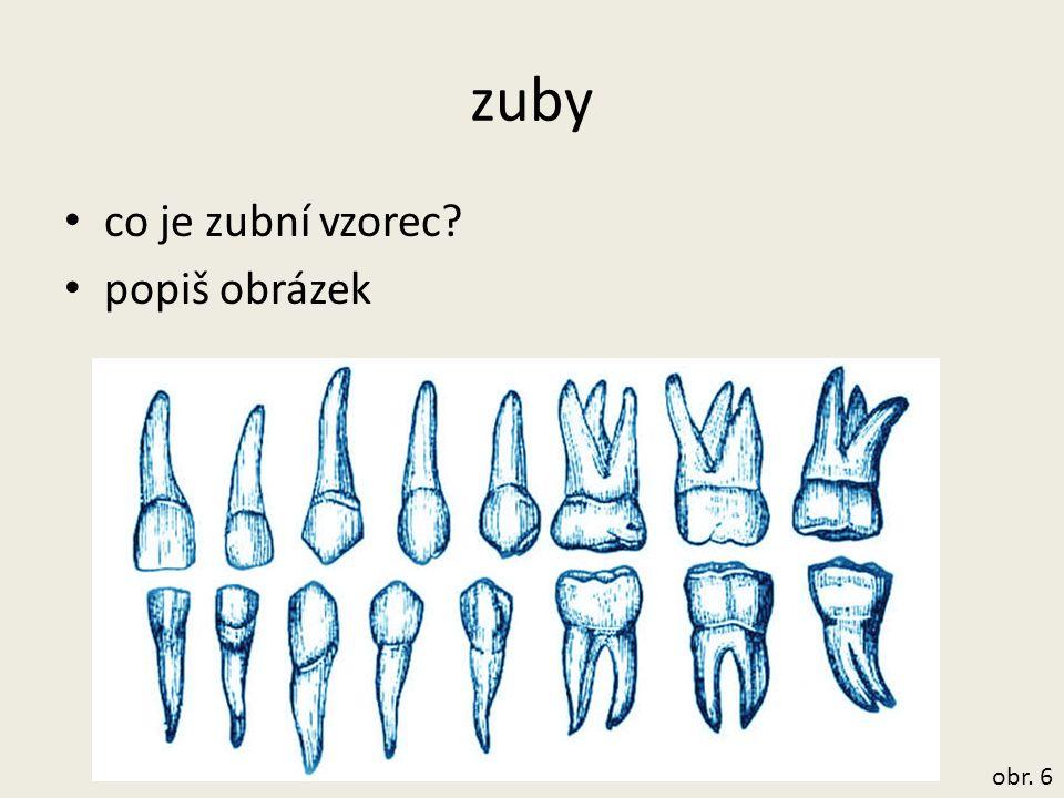 zuby co je zubní vzorec? popiš obrázek obr. 6