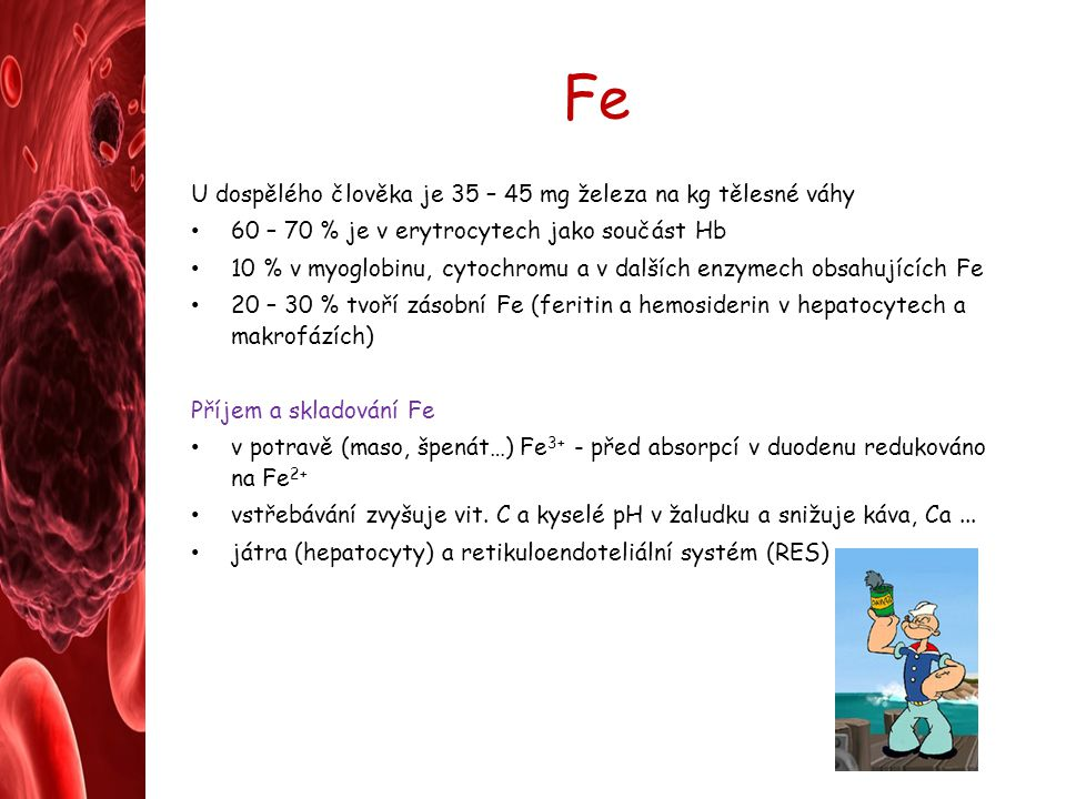 Fe U dospělého člověka je 35 – 45 mg železa na kg tělesné váhy 60 – 70 % je v erytrocytech jako součást Hb 10 % v myoglobinu, cytochromu a v dalších e