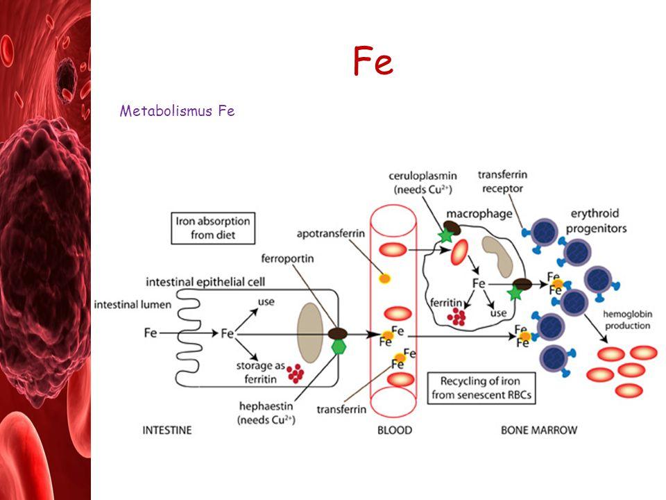 Patofyziologie krve a krvetvorné tkáně 1.Změny vlastností a složení krve – poruchy reologických vlastností krve a změny v počtu krevních b.