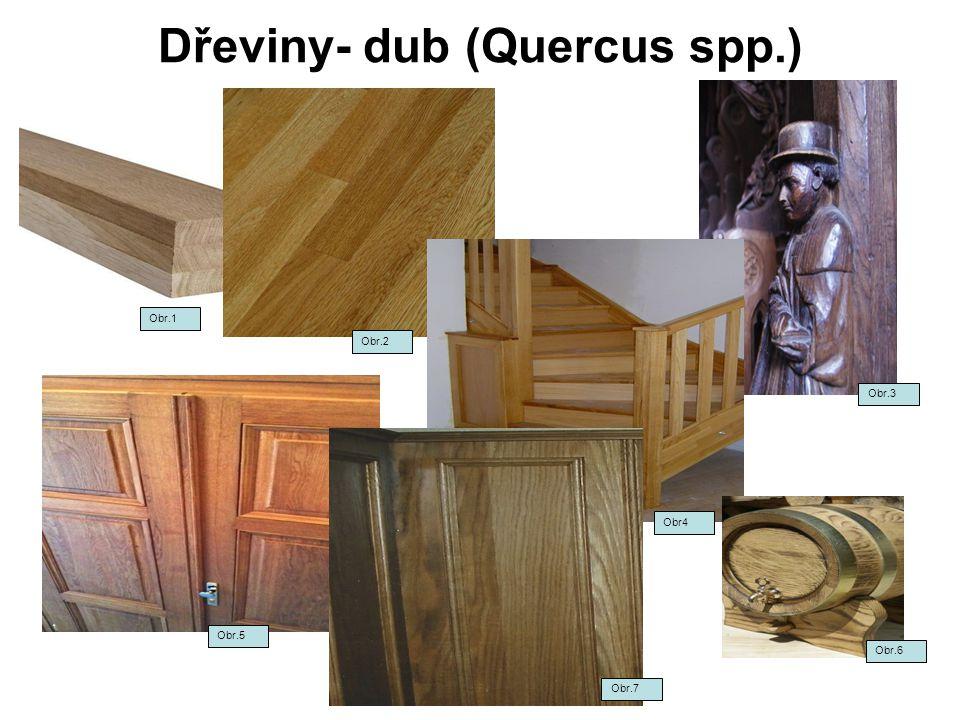 Dřeviny- dub (Quercus spp.) Obr.1 Obr.2 Obr.3 Obr4 Obr.5 Obr.7 Obr.6