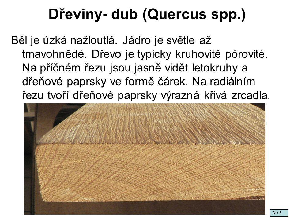 Dřeviny- dub (Quercus spp.) Běl je úzká nažloutlá. Jádro je světle až tmavohnědé. Dřevo je typicky kruhovitě pórovité. Na příčném řezu jsou jasně vidě