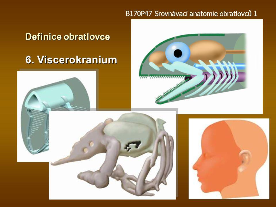 Definice obratlovce 5. Neurální lišta B170P47 Srovnávací anatomie obratlovců 1