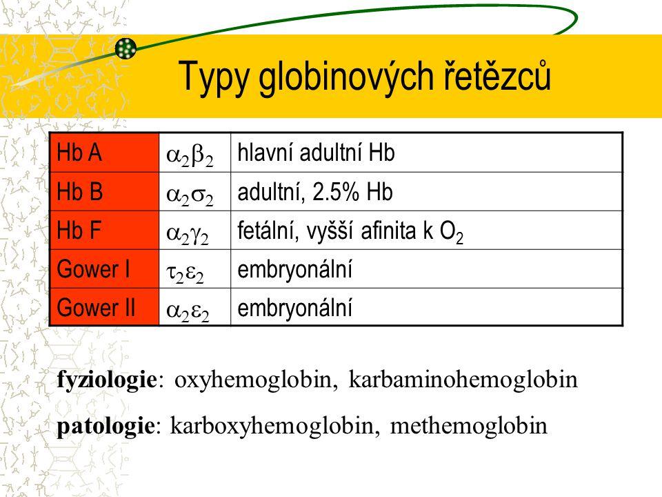 Typy globinových řetězců Hb A  hlavní adultní Hb Hb B  adultní, 2.5% Hb Hb F  fetální, vyšší afinita k O 2 Gower I  em