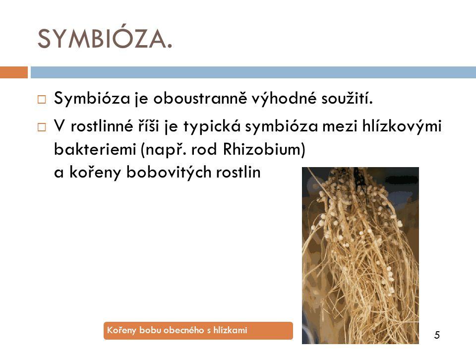 SYMBIÓZA.  Symbióza je oboustranně výhodné soužití.  V rostlinné říši je typická symbióza mezi hlízkovými bakteriemi (např. rod Rhizobium) a kořeny