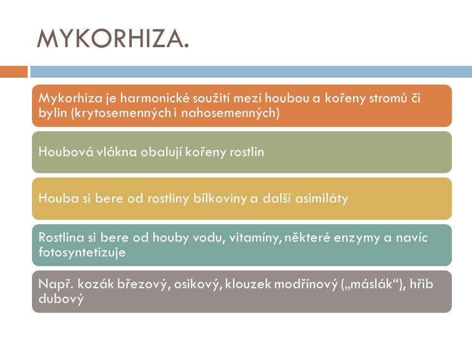 MYKORHIZA. Mykorhiza je harmonické soužití mezi houbou a kořeny stromů či bylin (krytosemenných i nahosemenných) Houbová vlákna obalují kořeny rostlin