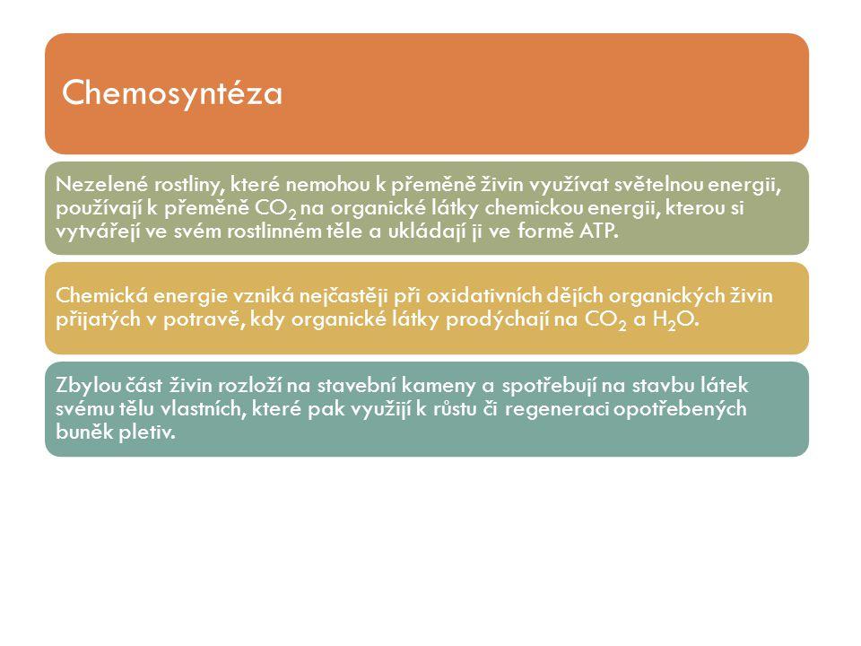 Chemosyntéza Nezelené rostliny, které nemohou k přeměně živin využívat světelnou energii, používají k přeměně CO2 na organické látky chemickou energii
