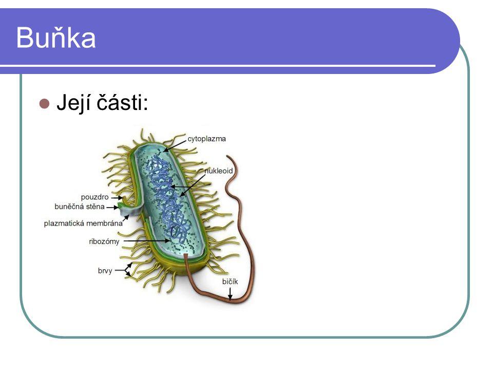 Buňka Její části: