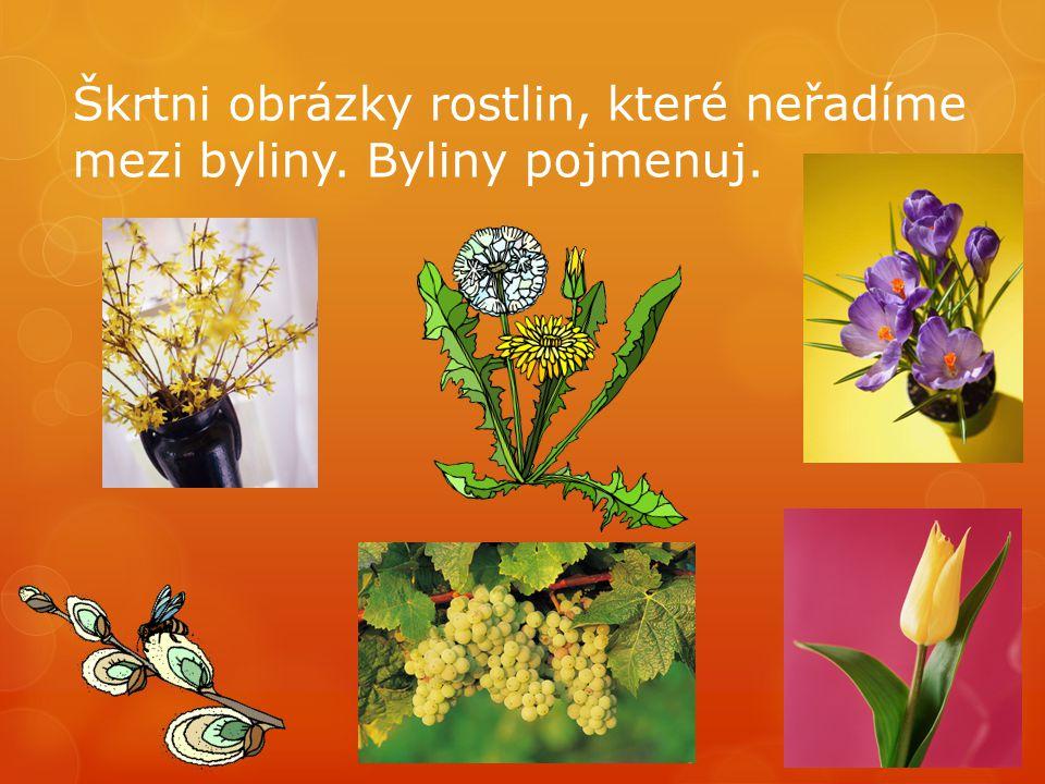 Škrtni obrázky rostlin, které neřadíme mezi byliny. Byliny pojmenuj.