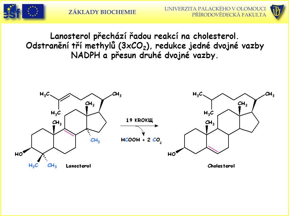 Lanosterol přechází řadou reakcí na cholesterol. Odstranění tří methylů (3xCO 2 ), redukce jedné dvojné vazby NADPH a přesun druhé dvojné vazby.