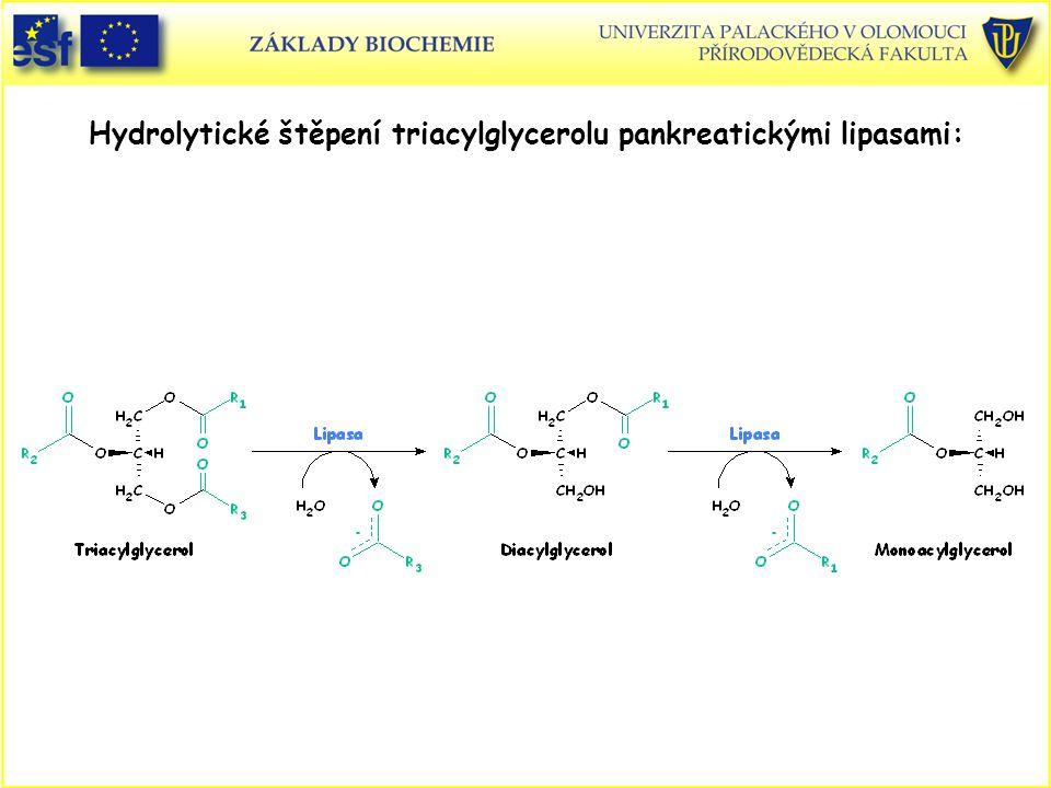 Hydrolytické štěpení triacylglycerolu pankreatickými lipasami: