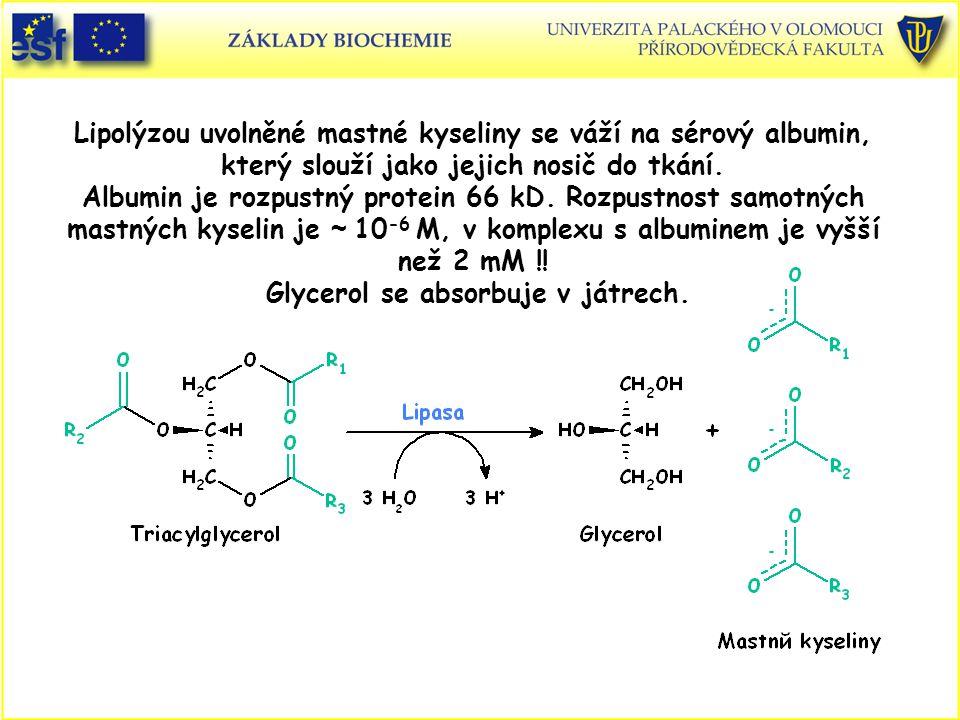 Lipolýzou uvolněné mastné kyseliny se váží na sérový albumin, který slouží jako jejich nosič do tkání. Albumin je rozpustný protein 66 kD. Rozpustnost