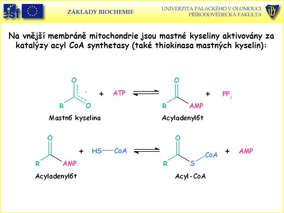 Na vnější membráně mitochondrie jsou mastné kyseliny aktivovány za katalýzy acyl CoA synthetasy (také thiokinasa mastných kyselin):