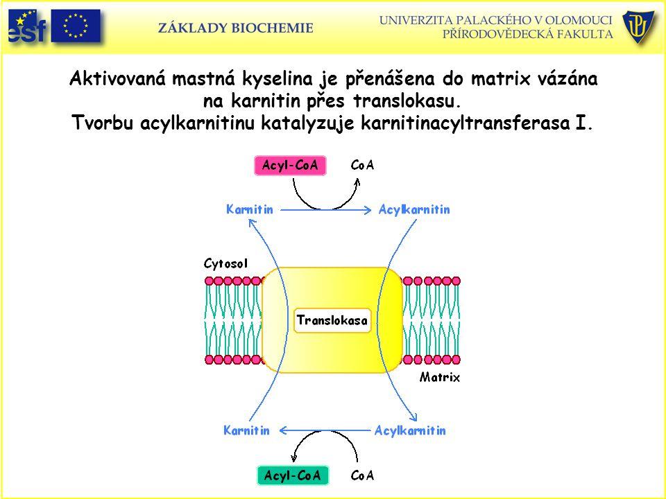 Aktivovaná mastná kyselina je přenášena do matrix vázána na karnitin přes translokasu. Tvorbu acylkarnitinu katalyzuje karnitinacyltransferasa I.