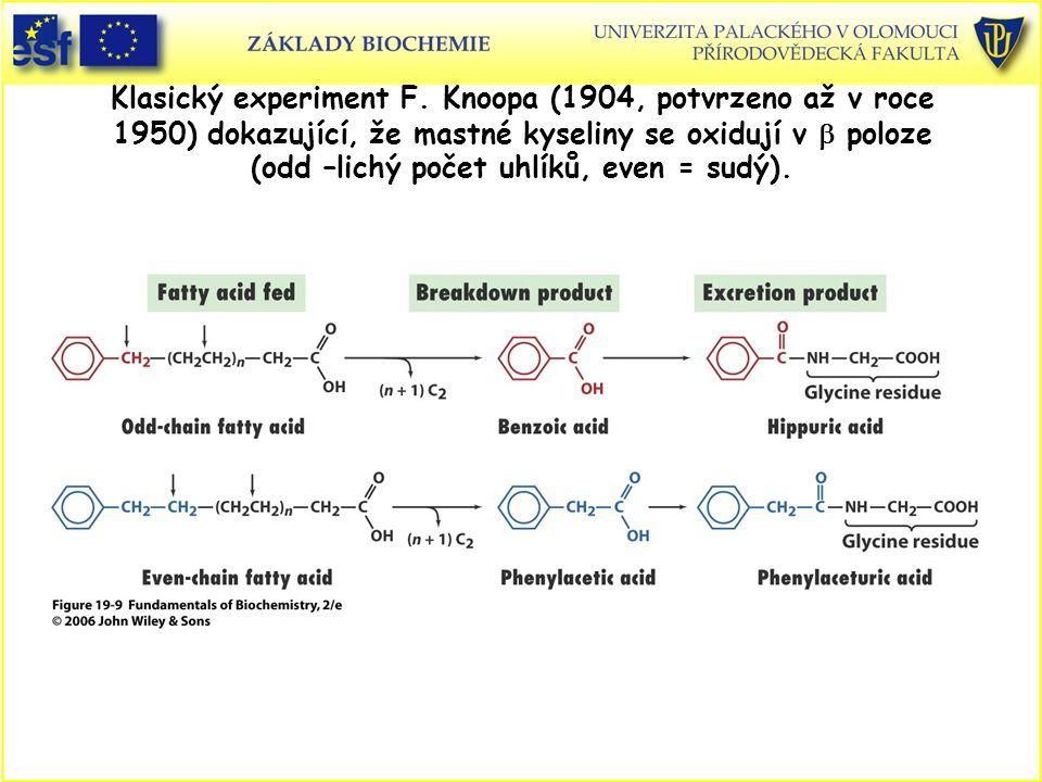 Klasický experiment F. Knoopa (1904, potvrzeno až v roce 1950) dokazující, že mastné kyseliny se oxidují v  poloze (odd –lichý počet uhlíků, even = s