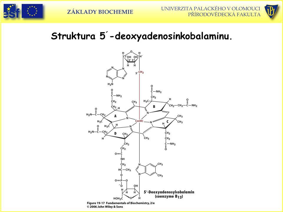 Struktura 5 ´ -deoxyadenosinkobalaminu.