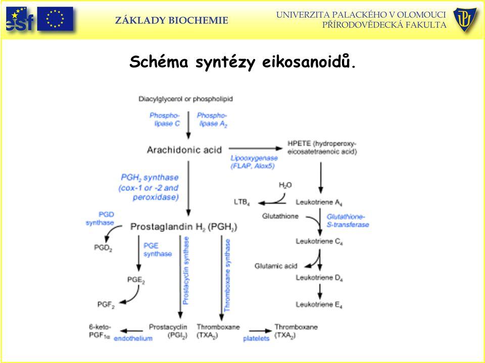 Schéma syntézy eikosanoidů.