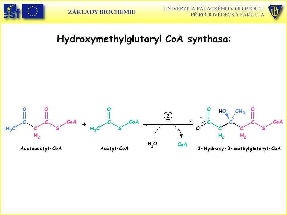 Hydroxymethylglutaryl CoA synthasa: