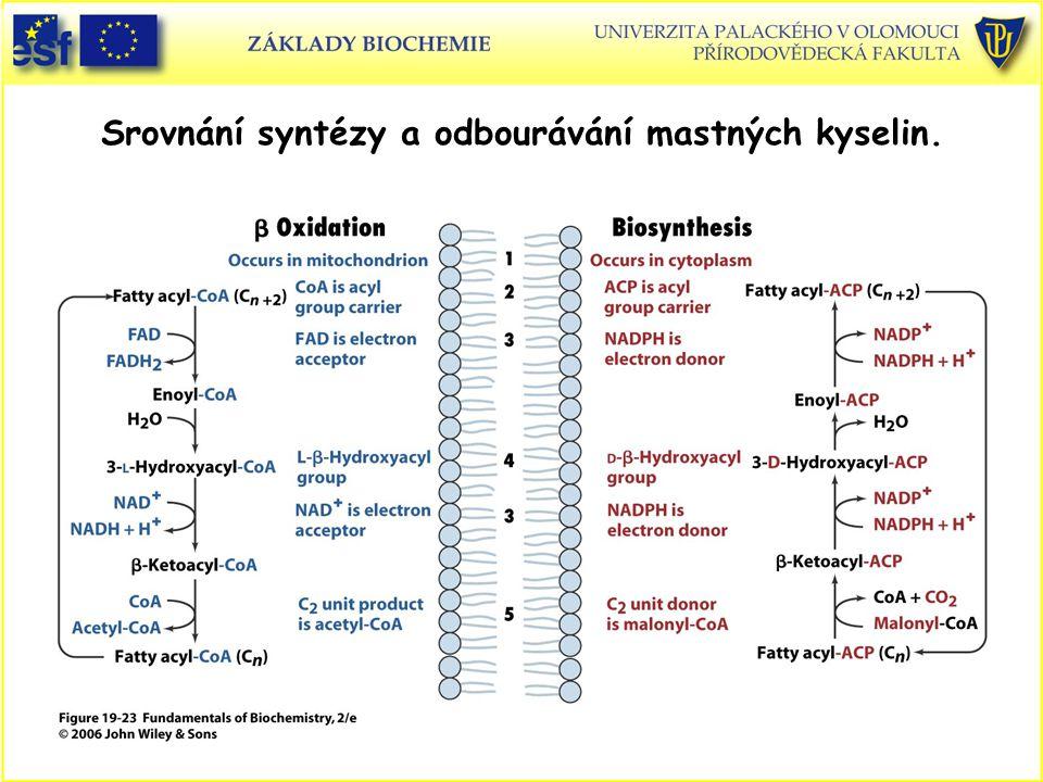 Srovnání syntézy a odbourávání mastných kyselin.