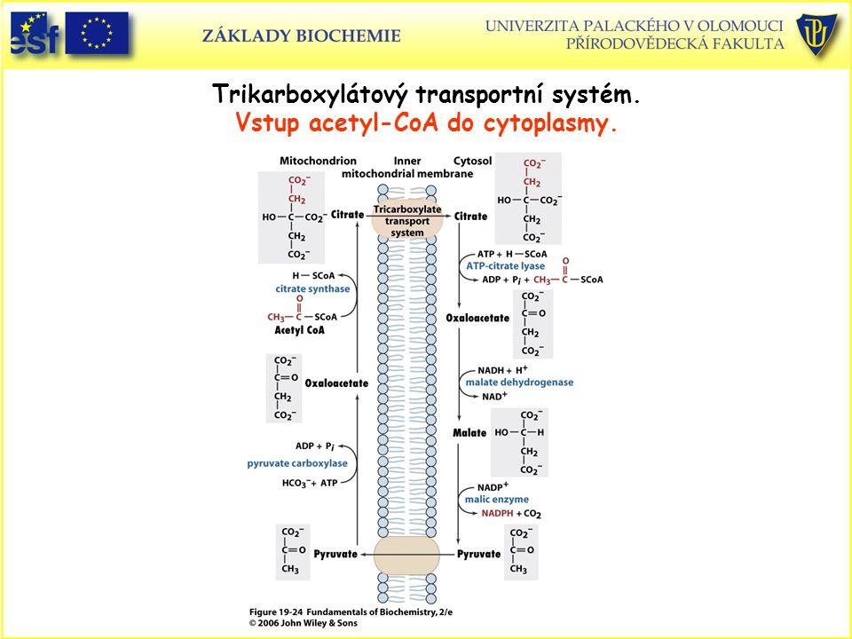 Trikarboxylátový transportní systém. Vstup acetyl-CoA do cytoplasmy.