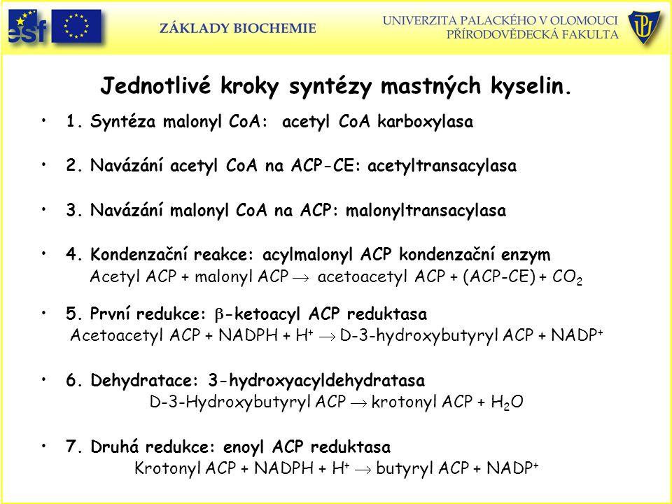 Jednotlivé kroky syntézy mastných kyselin. 1. Syntéza malonyl CoA: acetyl CoA karboxylasa 2. Navázání acetyl CoA na ACP-CE: acetyltransacylasa 3. Navá