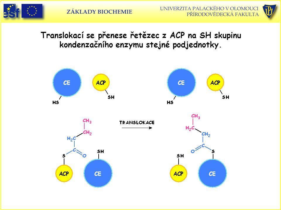 Translokací se přenese řetězec z ACP na SH skupinu kondenzačního enzymu stejné podjednotky.
