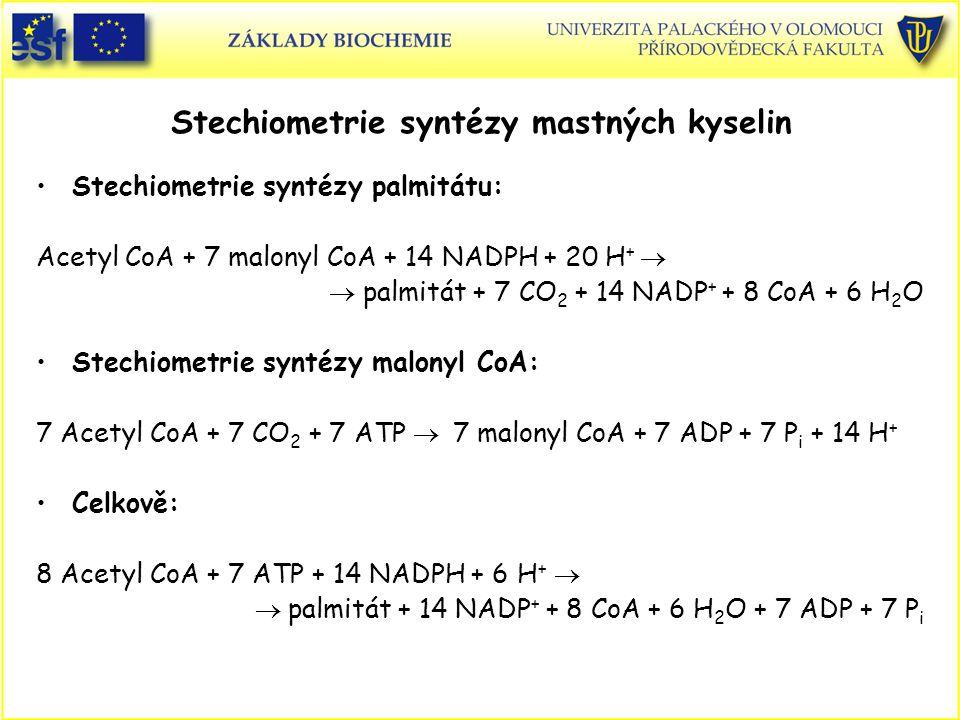 Stechiometrie syntézy mastných kyselin Stechiometrie syntézy palmitátu: Acetyl CoA + 7 malonyl CoA + 14 NADPH + 20 H +   palmitát + 7 CO 2 + 14 NADP