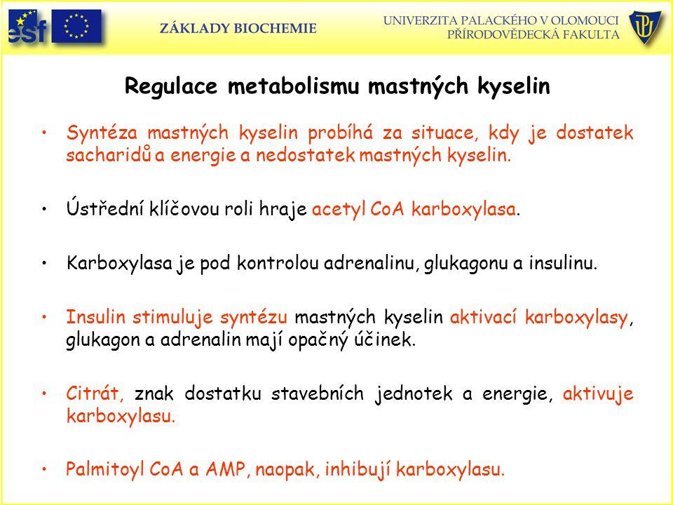 Regulace metabolismu mastných kyselin Syntéza mastných kyselin probíhá za situace, kdy je dostatek sacharidů a energie a nedostatek mastných kyselin.