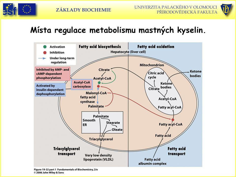 Místa regulace metabolismu mastných kyselin.