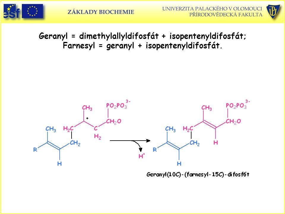 Geranyl = dimethylallyldifosfát + isopentenyldifosfát; Farnesyl = geranyl + isopentenyldifosfát.