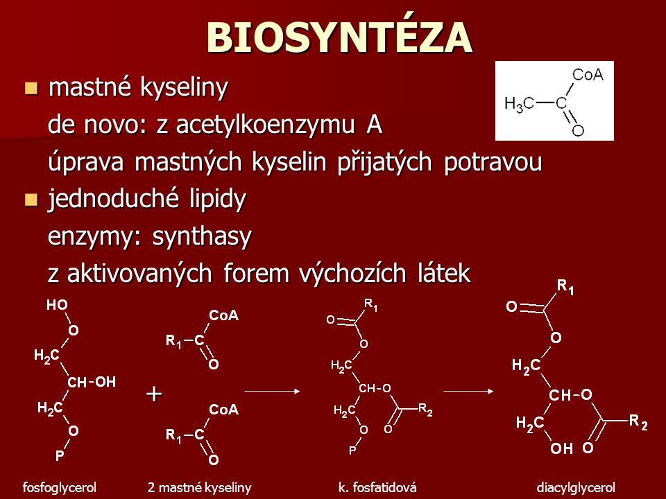 BIOSYNTÉZA mastné kyseliny mastné kyseliny de novo: z acetylkoenzymu A de novo: z acetylkoenzymu A úprava mastných kyselin přijatých potravou úprava m