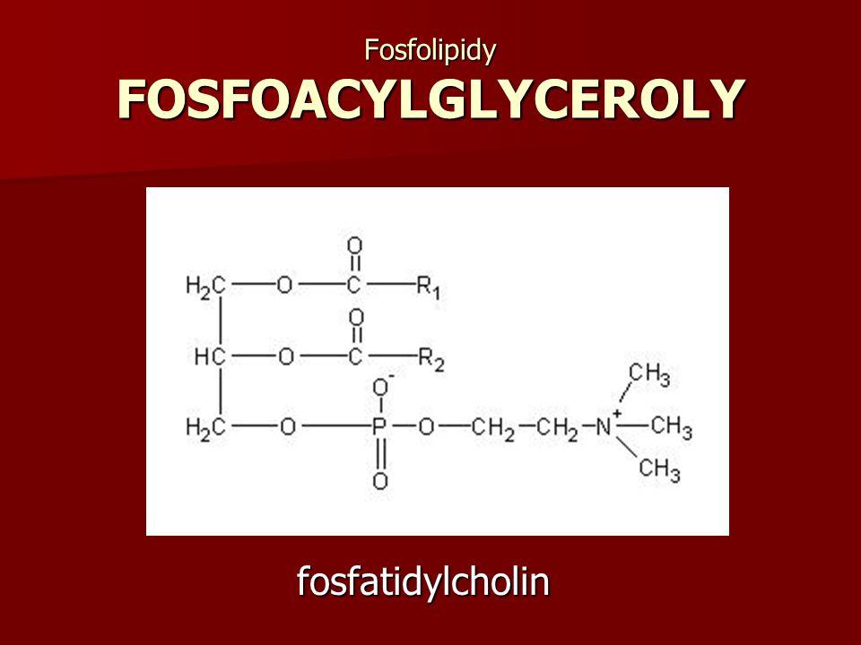 Fosfolipidy FOSFOACYLGLYCEROLY fosfatidylcholin