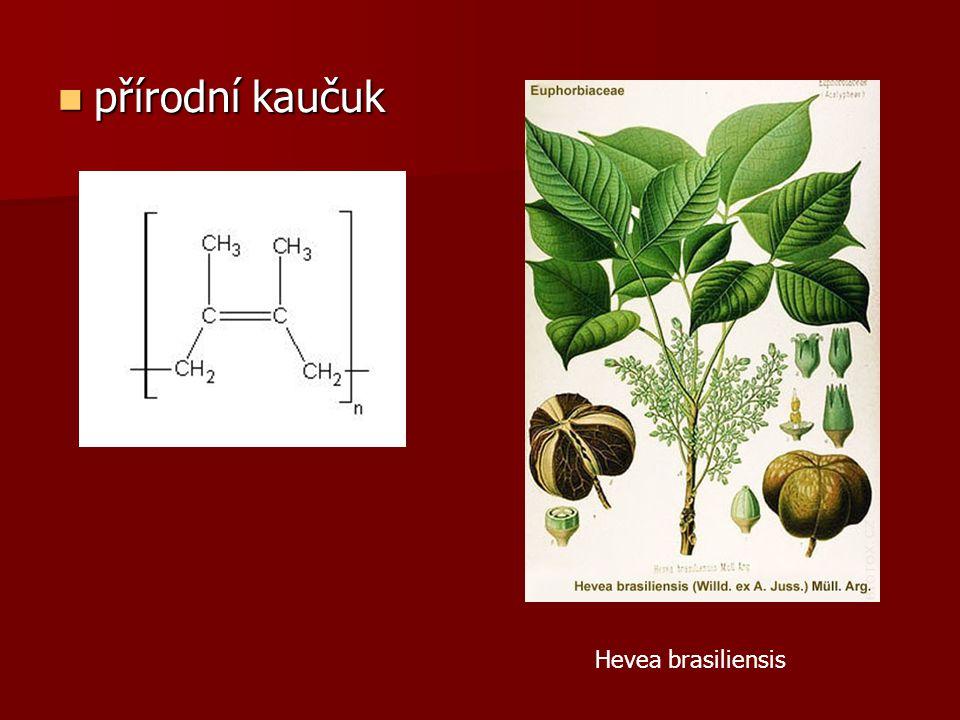 přírodní kaučuk přírodní kaučuk Hevea brasiliensis