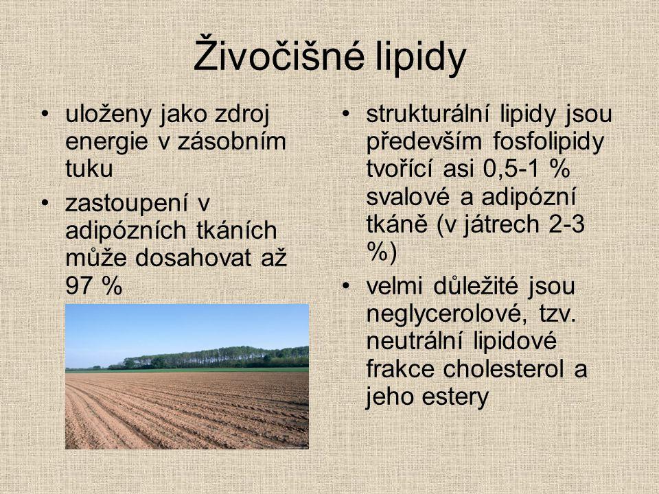 Živočišné lipidy uloženy jako zdroj energie v zásobním tuku zastoupení v adipózních tkáních může dosahovat až 97 % strukturální lipidy jsou především