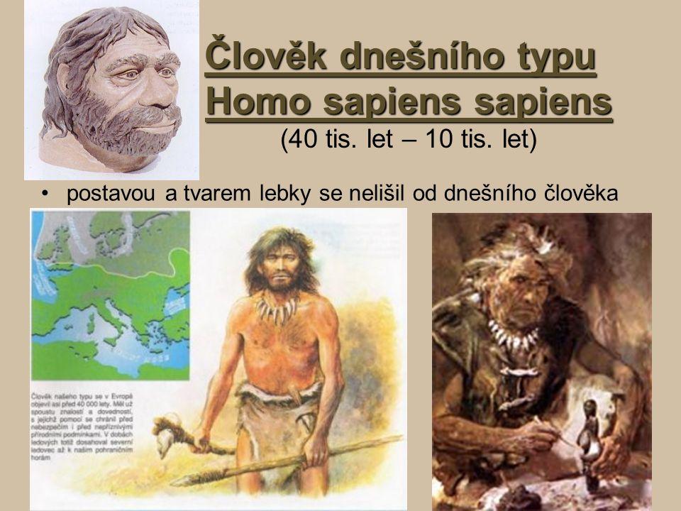 Člověk dnešního typu Homo sapiens sapiens Člověk dnešního typu Homo sapiens sapiens (40 tis. let – 10 tis. let) postavou a tvarem lebky se nelišil od