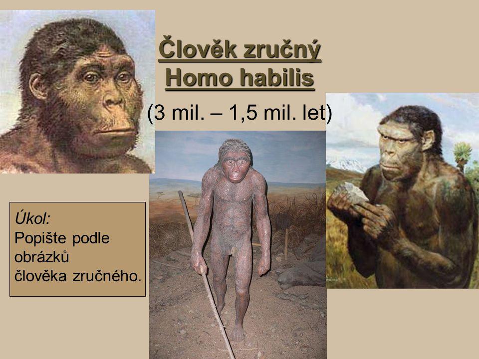 Člověk zručný Homo habilis Člověk zručný Homo habilis (3 mil. – 1,5 mil. let) Úkol: Popište podle obrázků člověka zručného.