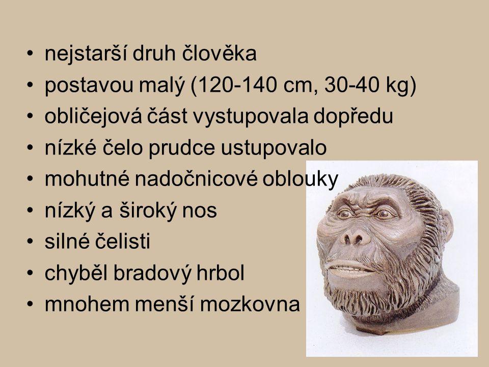 nejstarší druh člověka postavou malý (120-140 cm, 30-40 kg) obličejová část vystupovala dopředu nízké čelo prudce ustupovalo mohutné nadočnicové oblou