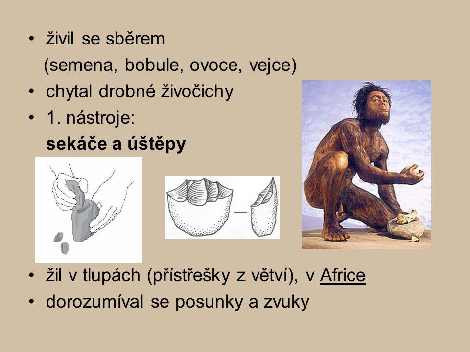 Člověk vzpřímený Homo erectus Člověk vzpřímený Homo erectus (1,5 mil.